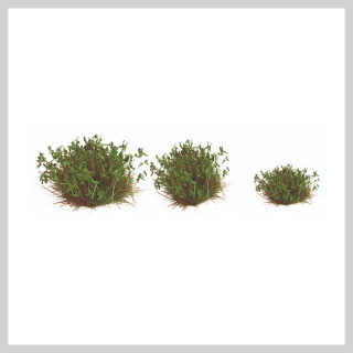 Army Painter - Lowland Shrubs